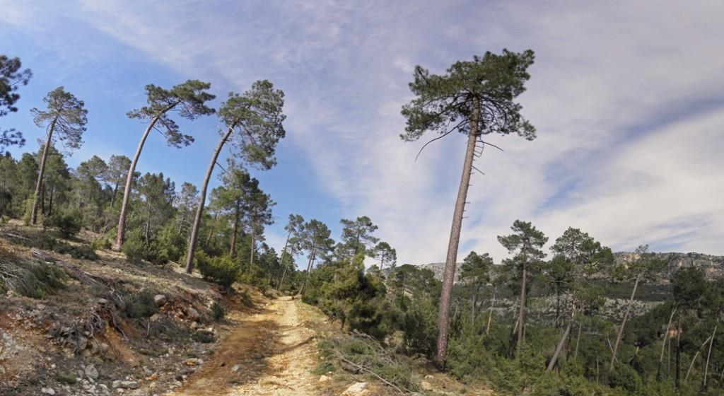 C.G. Molinillo - Acebadillas (Sierra del Pozo) (13)