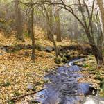 otoño en el Barranco del Pueblo [Lanteira, Sierra Nevada]